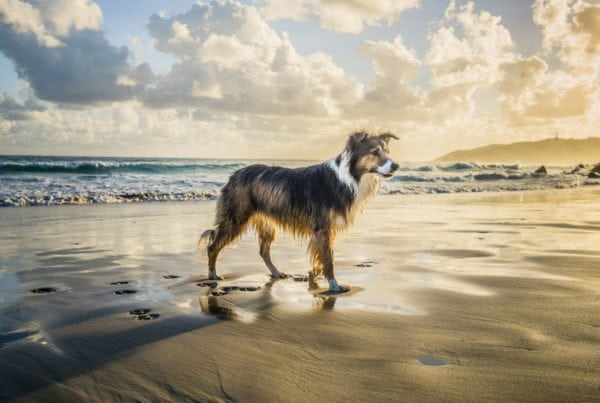 dog-friendly things to do in cornwall