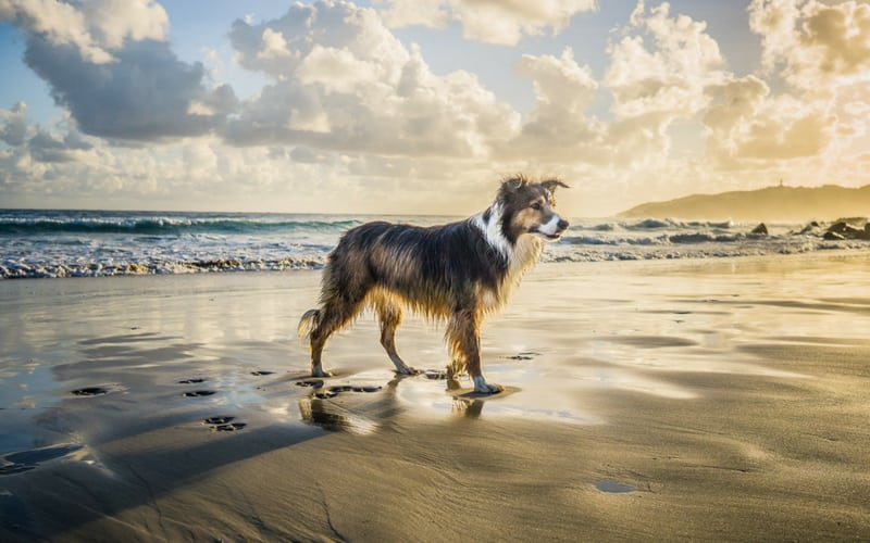 Exploring the Best Things to do in Cornwall with Dogs