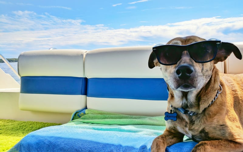 dog friendly hotels in cornwall